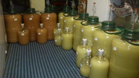 Large bottles lined up all full of elderflower wine fermenting